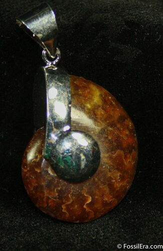 Whole Polished Ammonite Pendant